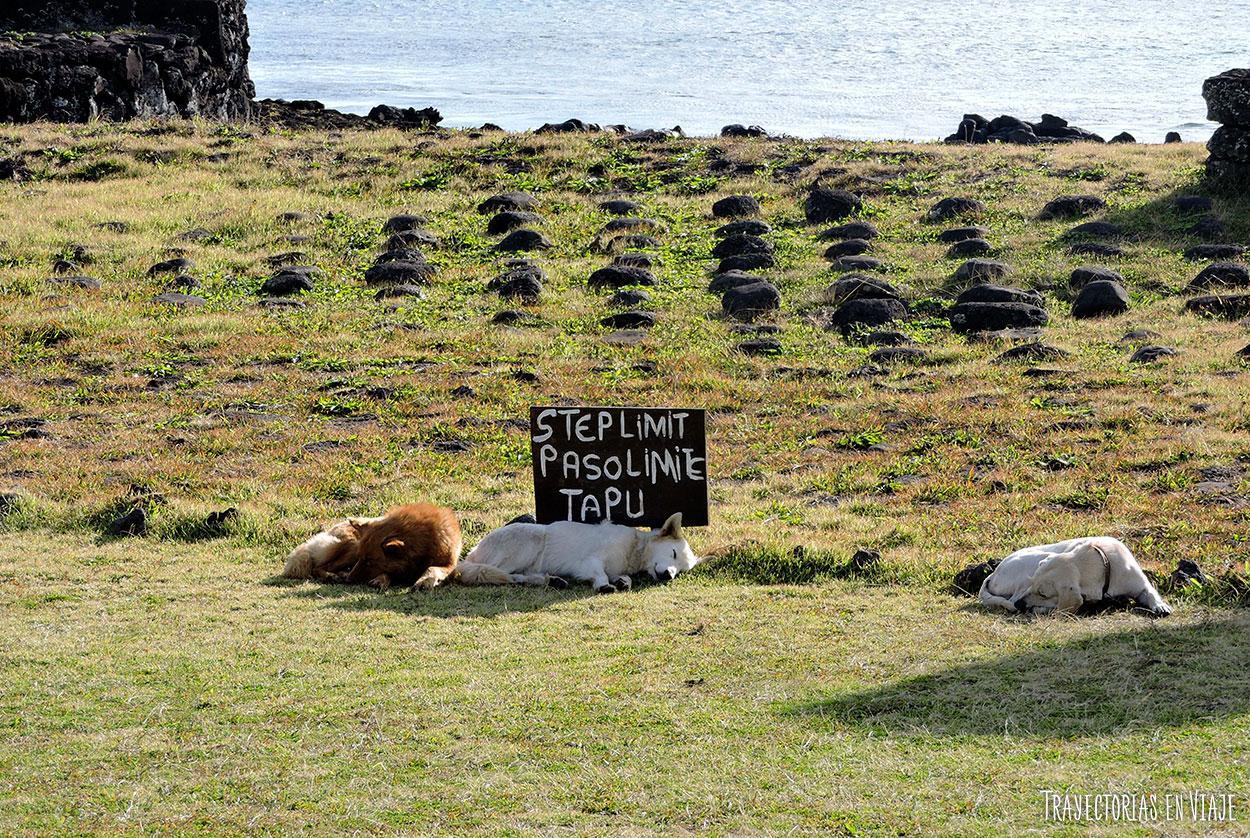 Los perros también son parte de la Isla de Pascua