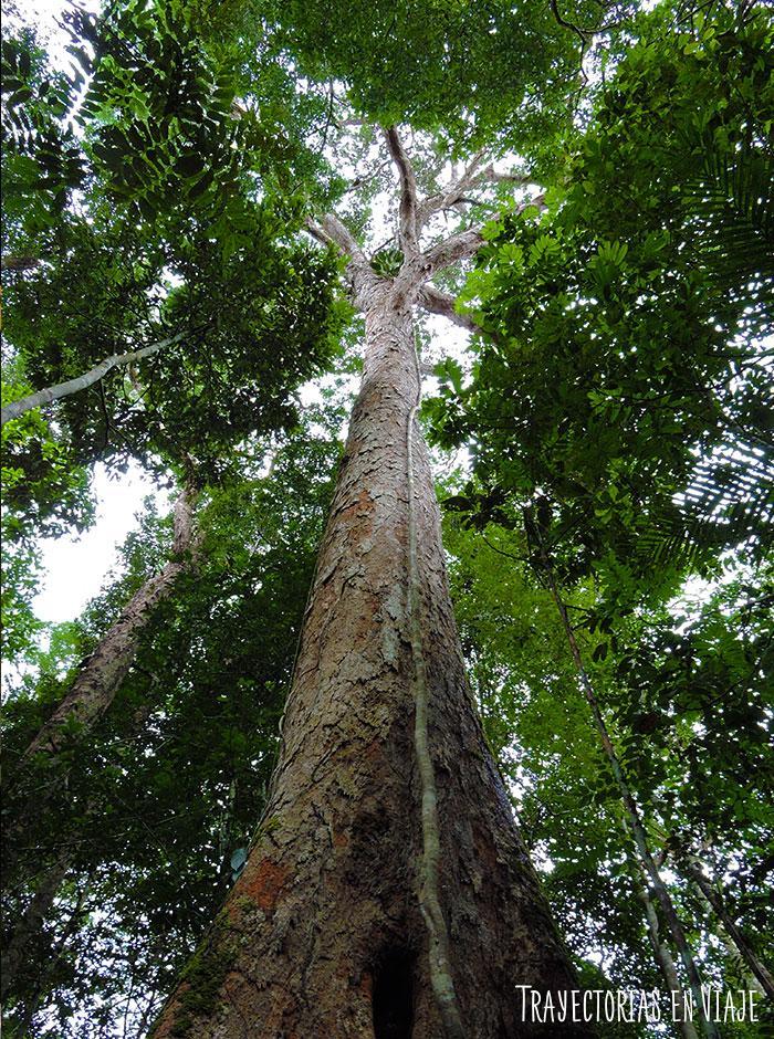 Imágenes de la Selva Amazónica