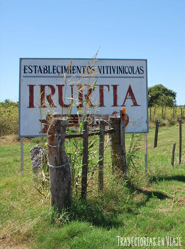 Viñas de la familia Irurtia. Carmelo Uruguay