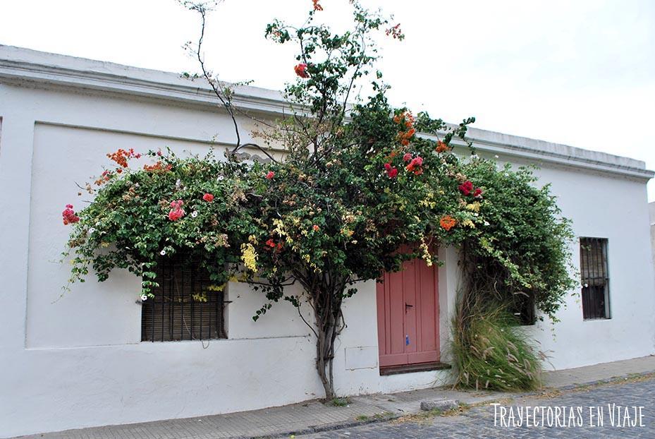 Puerta florida en Colonia Uruguay