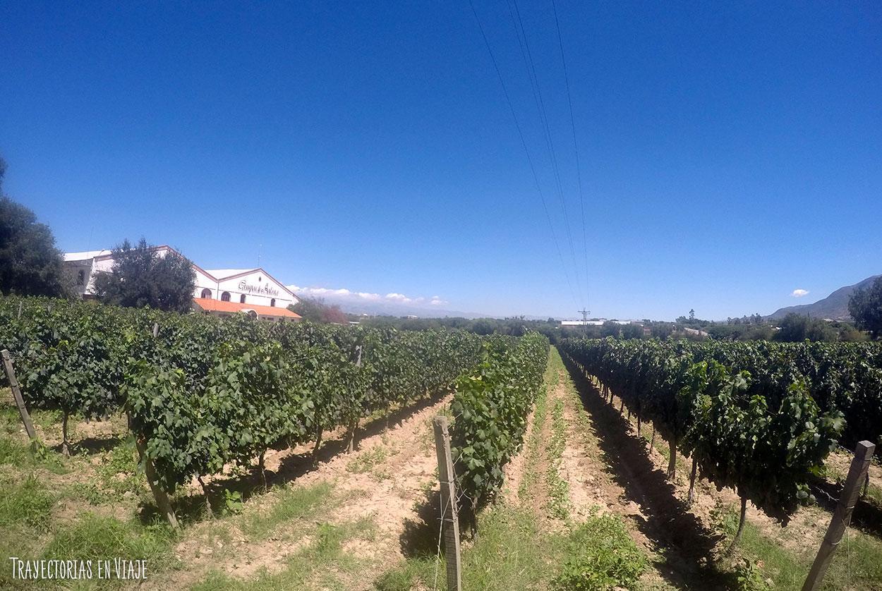 tarija-bolivia-ruta del vino