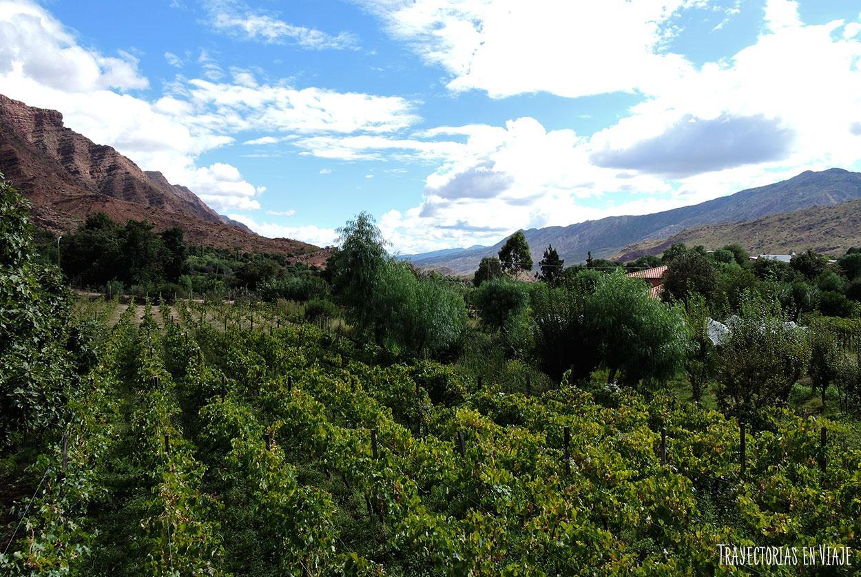 Viñedos cinteños, valle de los cintis