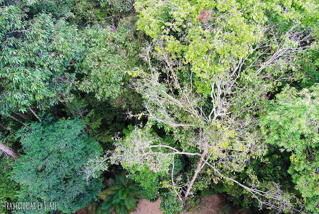 Amazonía brasileña desde arriba.