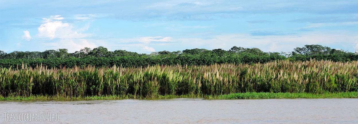 Vegetación del Amazonas de Brasil