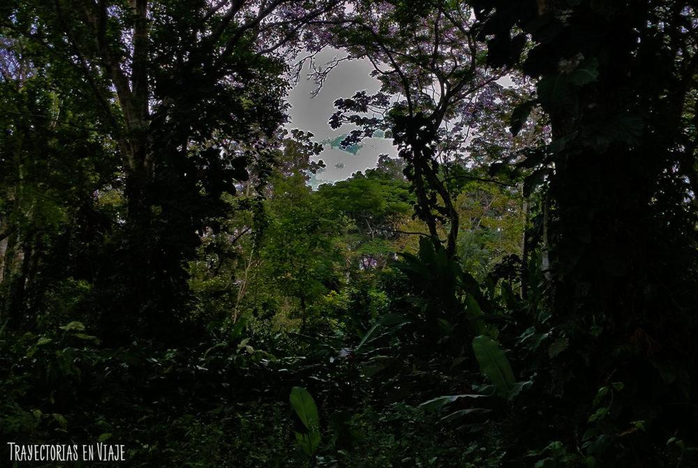 Selva amazónica colombiana
