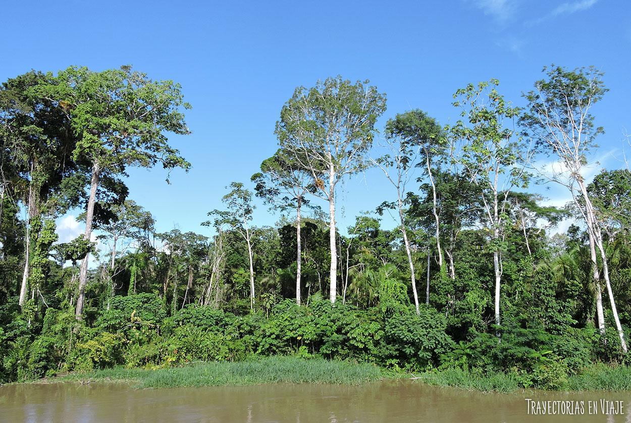 Viajar a Brasil y conocer la Amazonía