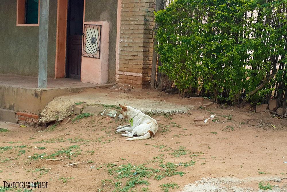 La vida de los perros en San José de Chiquitos
