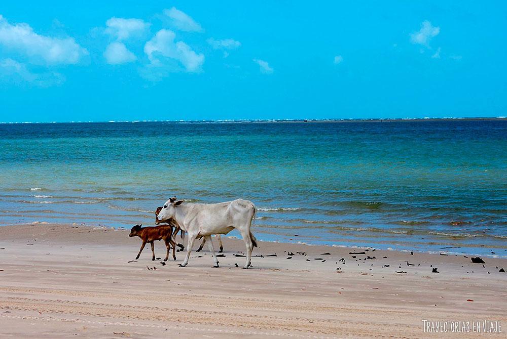 Lugares turísticos de Brasil: Atins